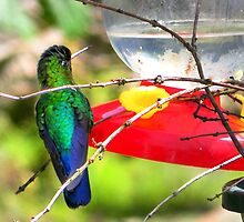 Sneaking Up On An Irazu Hummingbird by Al Bourassa