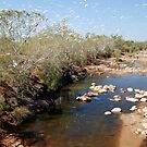 Little Corellas, Asburton River Crossing,  Western Australia (Y) by Adrian Paul