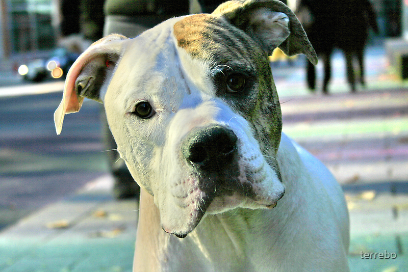 Dog In City Colors And Light Closeup  by terrebo