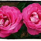 the roses by scarlettheartt