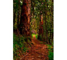 """The Pathway"" Photographic Print"