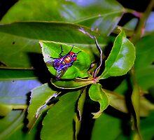 Fly on a leaf. by sarah bragg