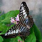 Beautiful Butterfly by Karen Kaleta
