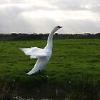 Stretching Swan by Anna Leworthy
