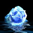 Rose #3 by Trevor Kersley
