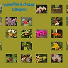 Butterflies & Orchids by Robert Abraham