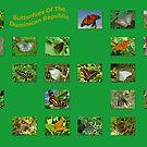 Butterflies Of The DR by Robert Abraham