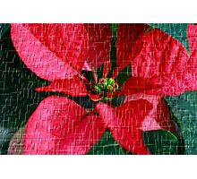 Flower For The Holidays Photographic Print