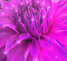 Purple Glow by Gail Bridger