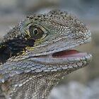 Bearded Dragon by Jay Spadaro