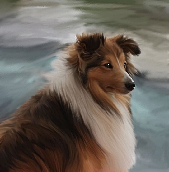 Shetland Sheepdog by Cazzie Cathcart