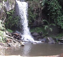 Crystal Falls in Rain forest of Qld. by HELEN TURNER