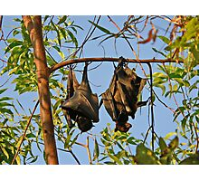 Hanging Out Photographic Print