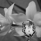 Cymbidium In Black & White by Kay  G Larsen