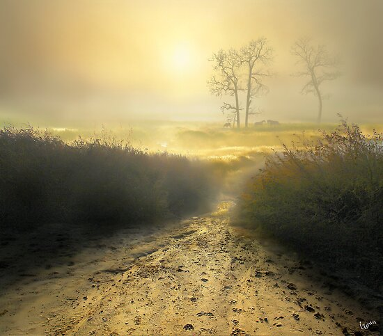 Fog by Igor Zenin