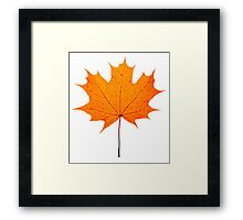 autumn maple-leaf Framed Print