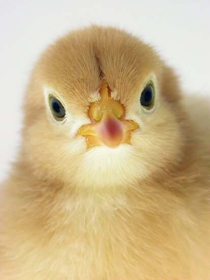 Chicky Babe by Leanne Robson