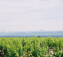 Provence Spring Vineyard by Nadine Rippelmeyer