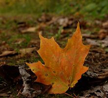 One lonely leaf. by Ashley Stewart