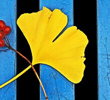 Red, Ginkgo, And Blue. by Todd Rollins