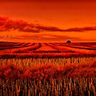 """Morning!! - After The Harvest"" by Phil Thomson IPA"