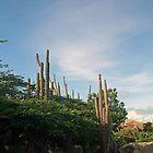 Organ Cactus by Linda Jackson