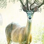 deer tree by vinpez