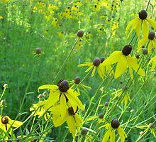 Field of Flowers by girljo818