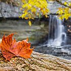 Autumn Leaf and Waterfall by Kenneth Keifer