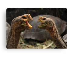 Dueling Tortugas  Canvas Print