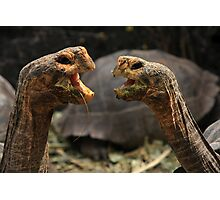 Dueling Tortugas  Photographic Print