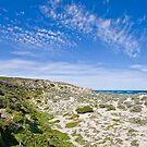 Seal Bay - Kangaroo Island by AllshotsImaging
