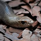 Fierce Snake by Steven Ungermann