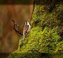 LITTLE CREEPER by Sandy Stewart