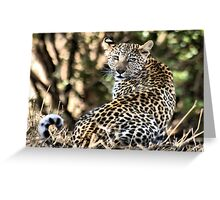 THE LEOPARD - Panthera pardus - Luiperd Greeting Card