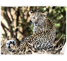 THE LEOPARD - Panthera pardus - Luiperd Poster