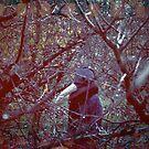 The Cautionary Scare-Crow by James McKenzie