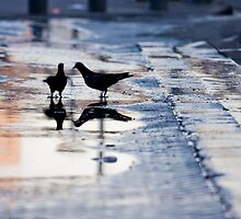 after rain by Victor Bezrukov
