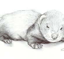baby ferret by sparkitny