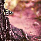 The Caterpillar by Craig Shillington