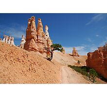 The Lone Tree - Bryce Canyon National Park Photographic Print
