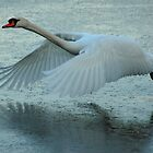 Flying Swan by Brendan Schoon