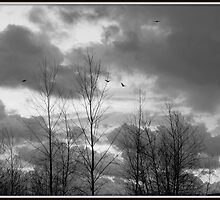 As the crow flies in black and white by Karen Cook