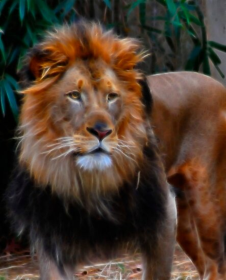 Fractalius King by Jeff Palm Photography