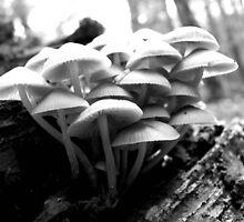 Mushrooms by brechu59