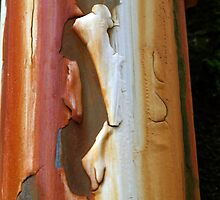 Peeling Paint 19 by rdshaw