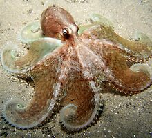 Octopus Spread. by James Peake