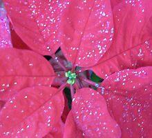 POINTSETTIA with Glitter  by Michelle BarlondSmith