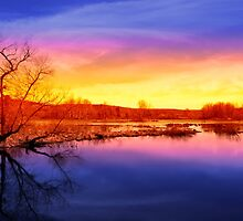 Tranquil Tree Reflection Sunset by Christina Rollo