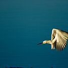 Snowy Egret's Flight by Jonicool